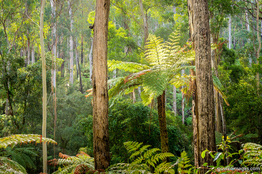 Lind - National Parks In Victoria