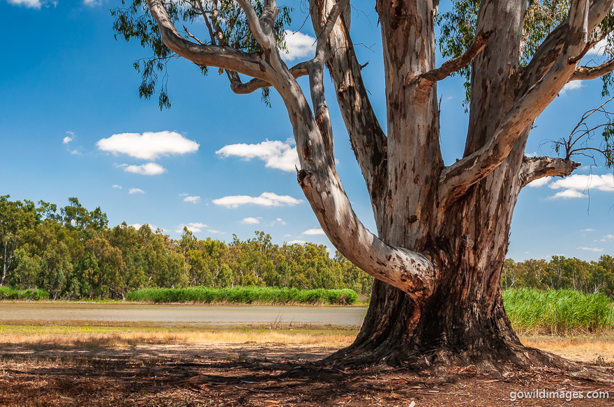 Barmah - National Parks In Victoria