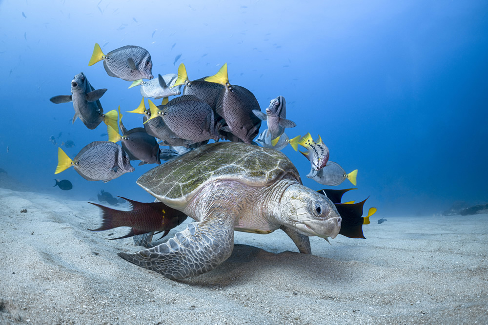 The Winners Of 2020 Ocean Photography Awards