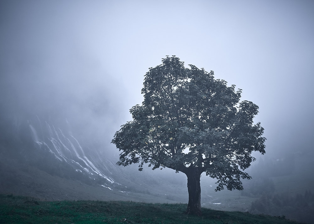 Trees Of The Mountains: From A Journey Through The Swiss Alps By Alexandra Wesche