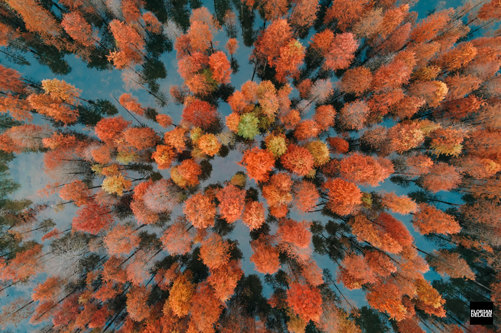 Red Forest: Autumn In Anhui – Aerial Photography By Florian Delalee