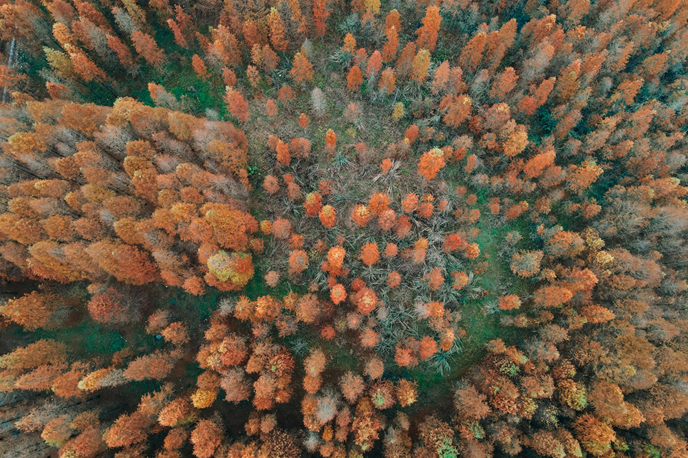 Red Forest: Autumn In Anhui By Florian Delalee