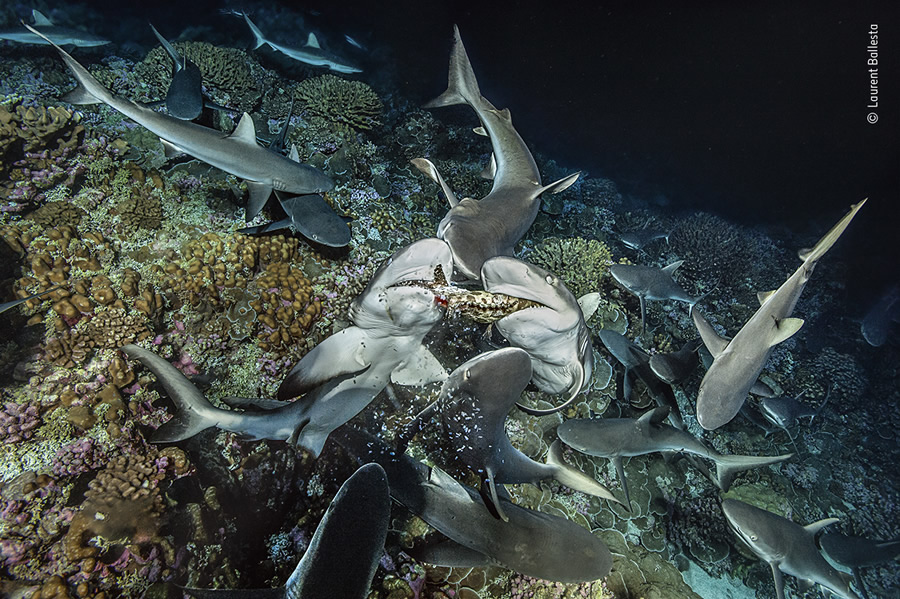 Choose The People's Choice Award For Wildlife Photographer Of The Year