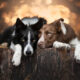 25 Stunning Photos Of My Two Border Collies By Emily Abrahams