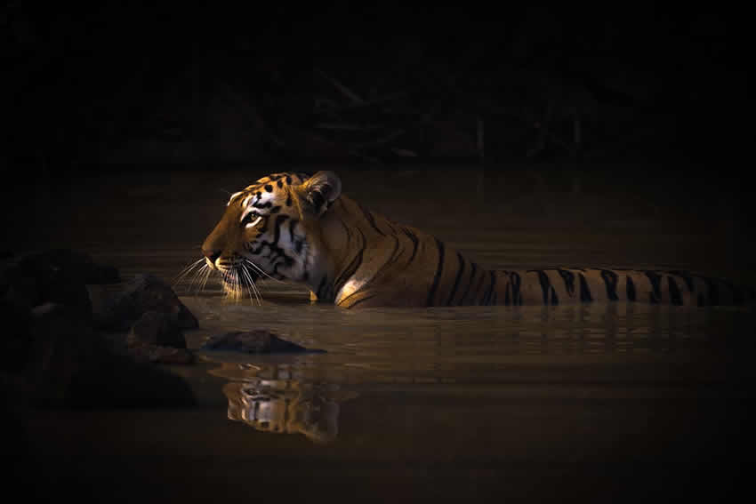 Winners of the 2020 World Nature Photography Awards