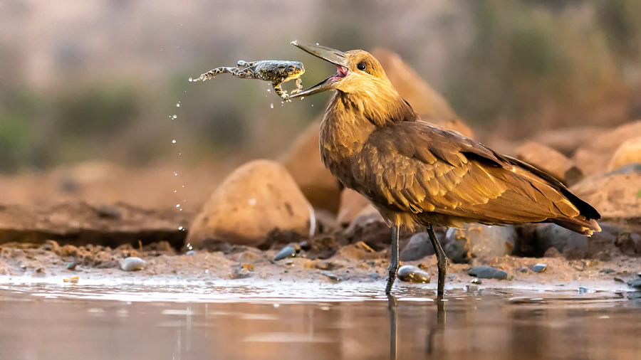 The Bird Photographer Of The Year 2021 Competition