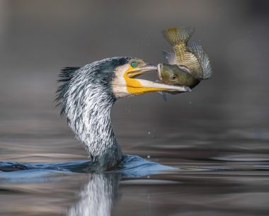 30 Finalists From The Bird Photographer Of The Year