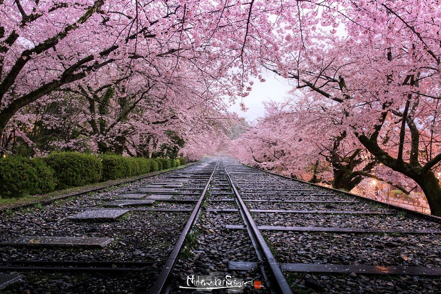 25 Beautiful Photos Of Sakura Blooming In Japan By Hidenobu Suzuki