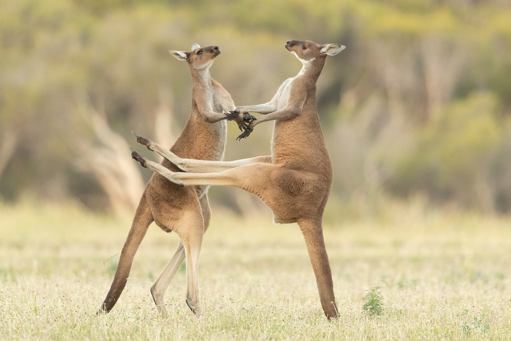 Best Entries So Far From Comedy Wildlife Photography Awards