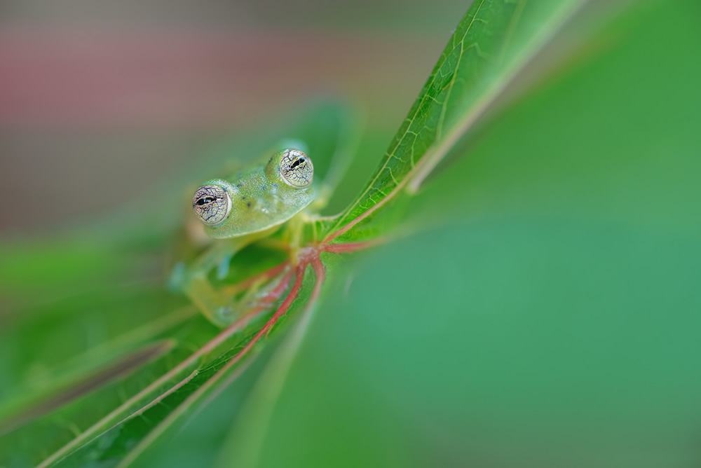 WildArt Photographer Of The Year: Winners Of EYES Competition