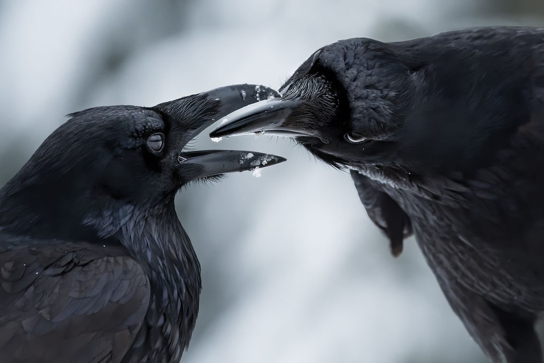 The 2021 Winners Of BigPicture Natural World Photography Contest