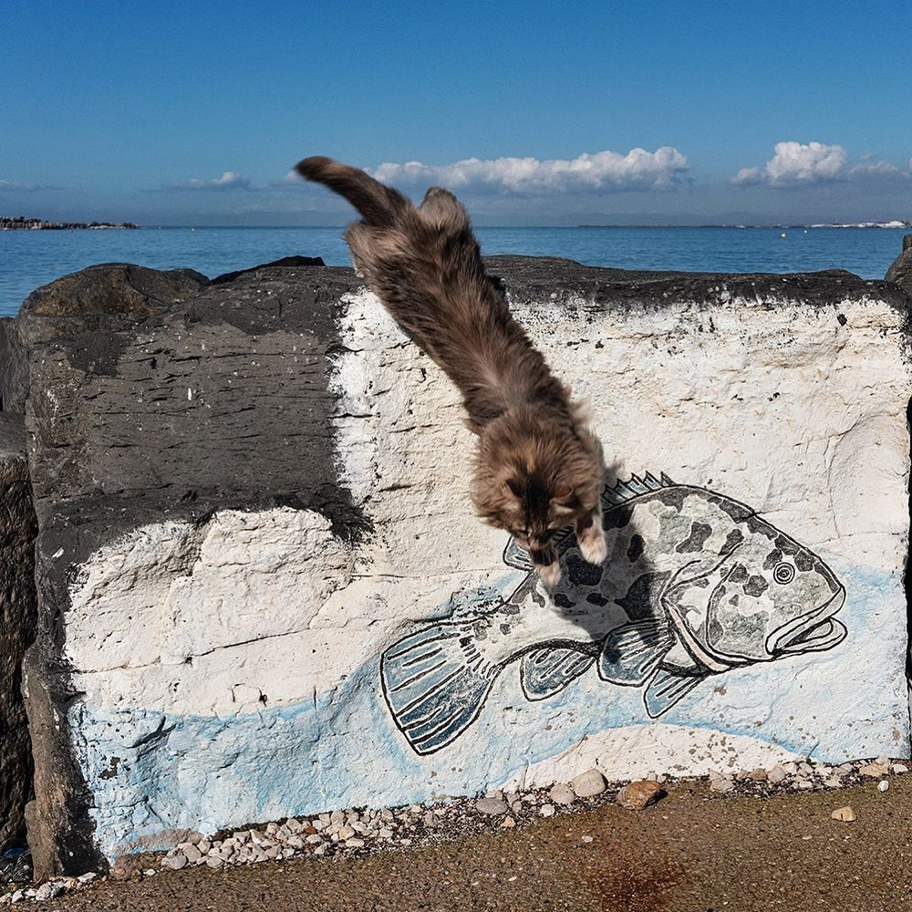 Amazing Photos From Animal IN Street Instagram Page