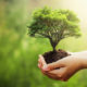 Nature vs. Nurture: How Does a Teenager's Upbringing Have an Impact On Their Environmental Attitudes