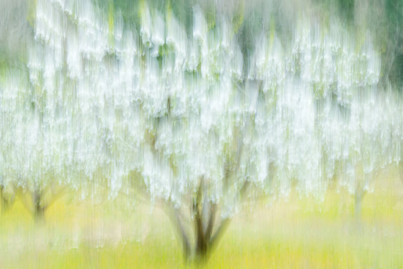 The Winners Of WildArt POTY ABSTRACTS Competition