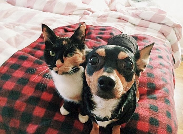 Adorable Animals Who Have Brothers From Other Mothers