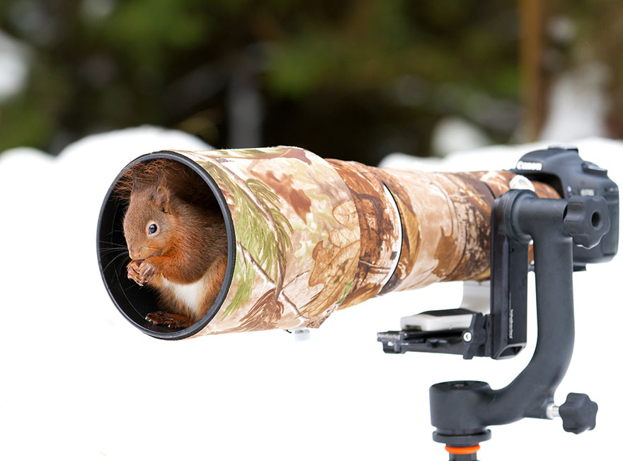30 Cute Photos Of Animals That Want To Be Photographers