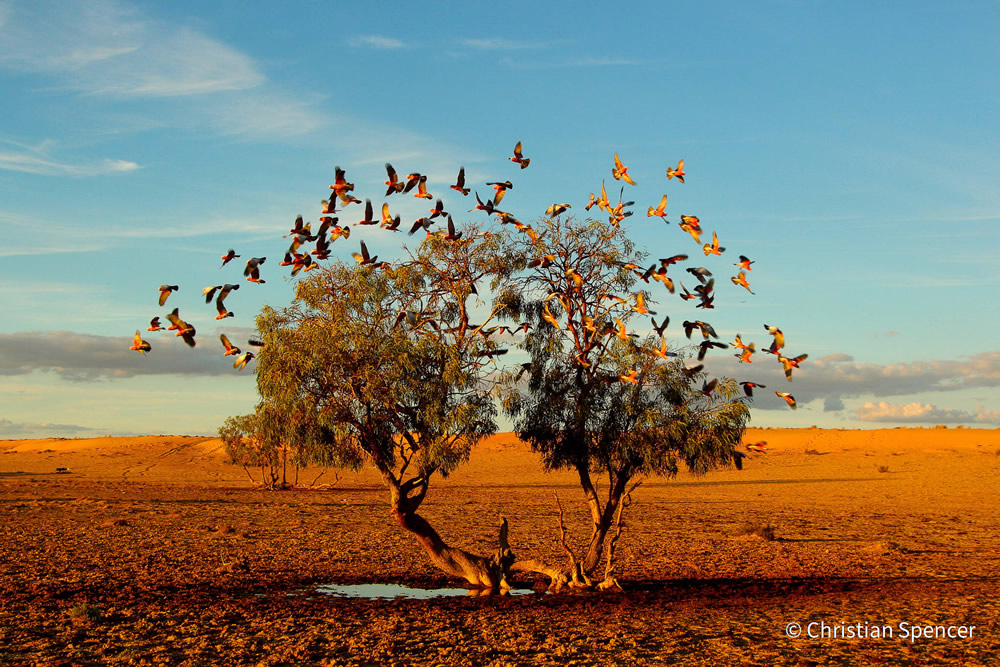 Stunning Photos Of Australian Geographic Nature Photographer of the Year