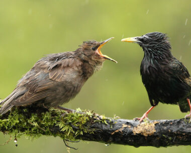 35 Pictures To Teach You About Decisive Moment In Bird Photography