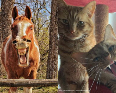 40 Cutest Finalists Of Animal Friends Comedy Pet Photo Awards 2021