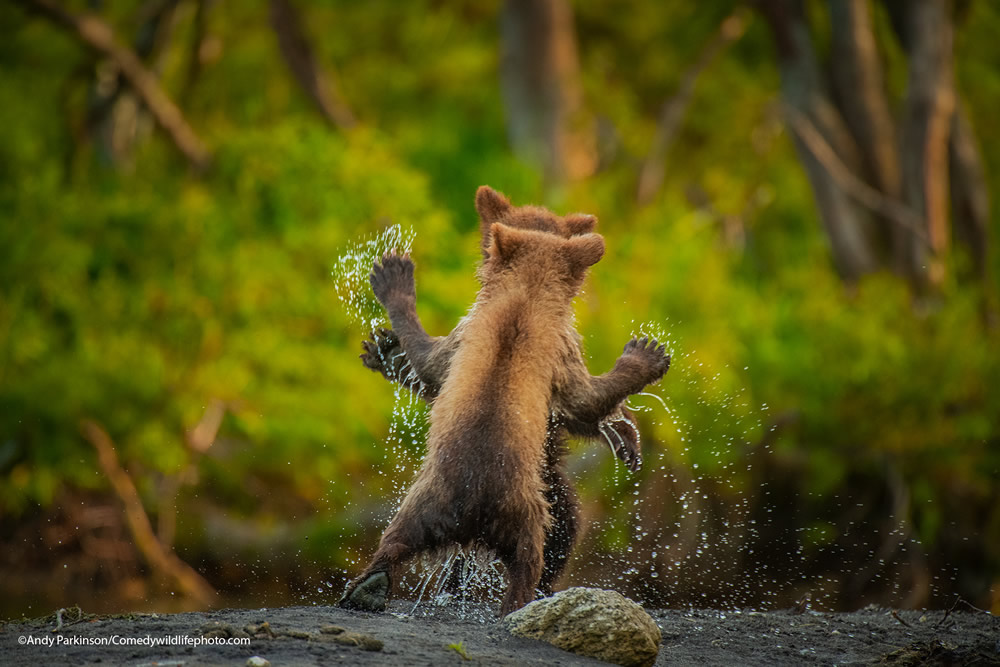 42 Funniest Photos Of The Comedy Wildlife Photography Awards 2021