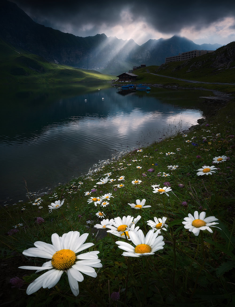 Beautiful Flowers Of The Alps In The Summer By Isabella Tabacchi