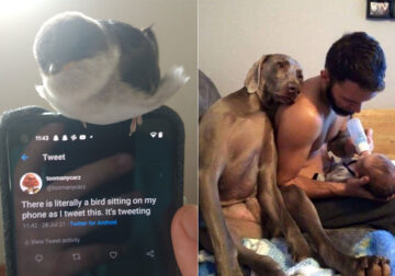 35 Crazy And Funniest Animal Pictures Shared By This Facebook Page
