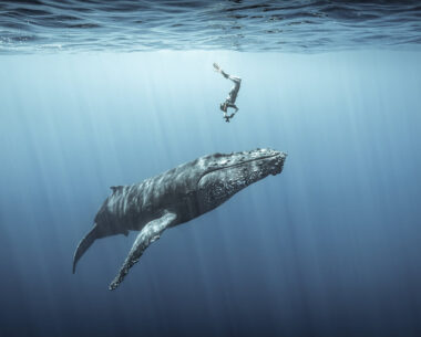 14 Most Impressive Photos From The Ocean Photography Awards 2021 Finalists