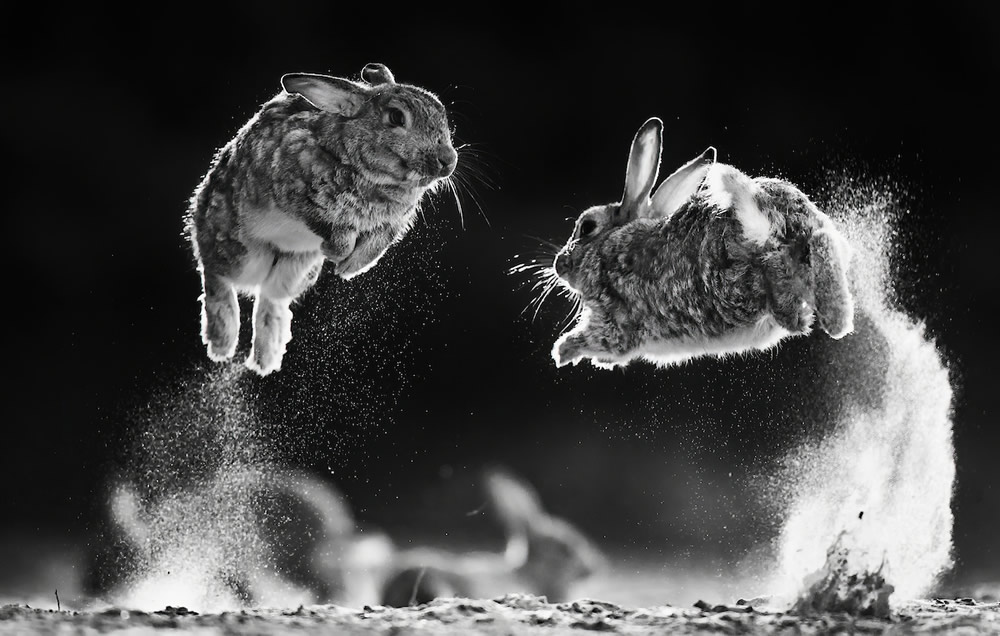 The Winners Of WildArt POTY Monochrome Competition