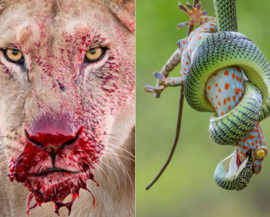 The Best 16 Photos Of The Wildlife Photographer Of The Year 2021