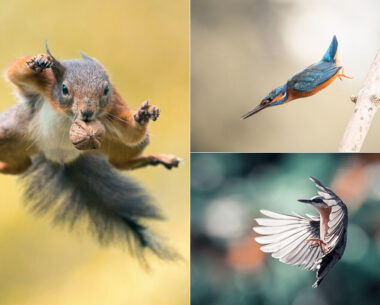 Photographer Niki Colemont Spent 5 Years Capturing Perfectly Timed Action Shots Of Animals In Nature