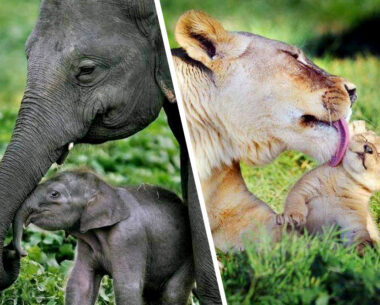 20 Photos Of Animal Moms Who Show You What Motherhood Is Really Like