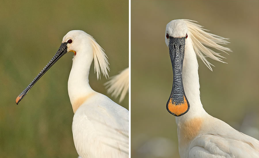 Dutch Photographer Captured Birds From The Front That Will Make You Laugh Out Loud