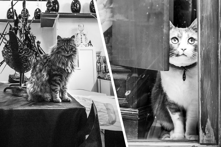 Cats At Work: 30 Photos Of Cats Living In People's Working Places By Marianna Zampieri