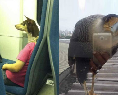 30 Confusing Perspective Images Those Will Make You Do A Re-Think (New Pics)