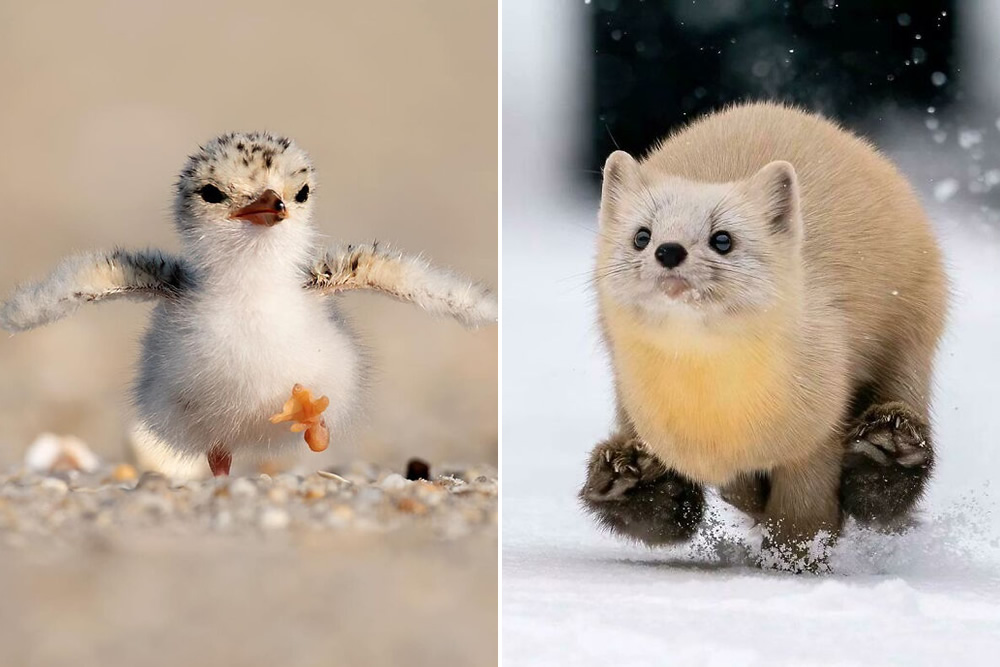 50 Cutest Animals People Spotted And Just Had To Take A Pic Of Them