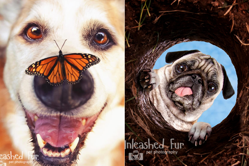 I Photograph Senior Dogs To Preserve Their Memories In Honor Of My Own Dogs That Passed Away
