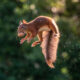 To Spread Some Joy, I Photograph Squirrels Playing In My Garden By Niki Colemont