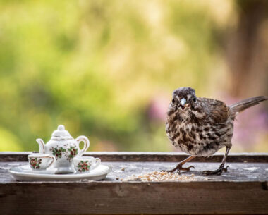 Tea For Two: Magical Photos Of Animals By Jay Rainey